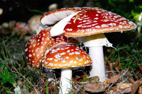 Funghi velenosi, come certi comitati, enti promotori, associazioni...