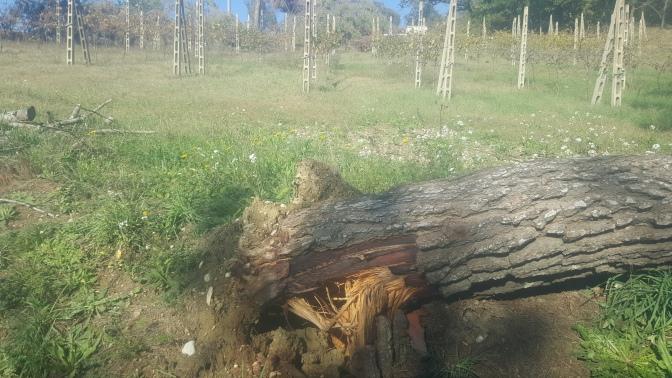 Mozione Orvieto Resiliente ed Ecosolidale